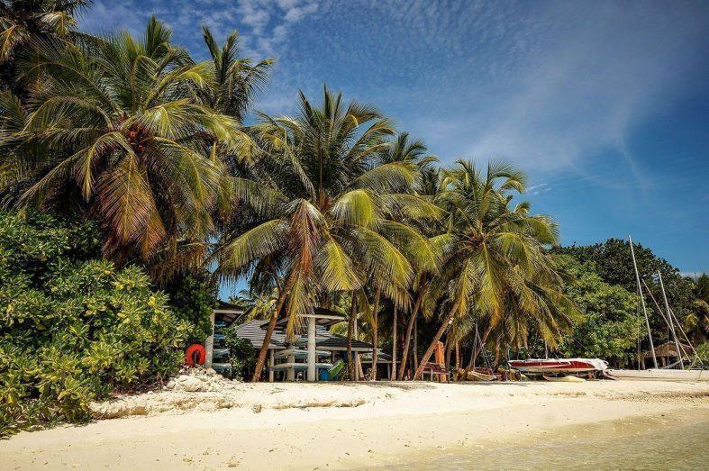 Palmový háj u pláže