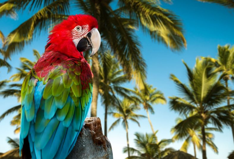 Papoušek Red Macaw