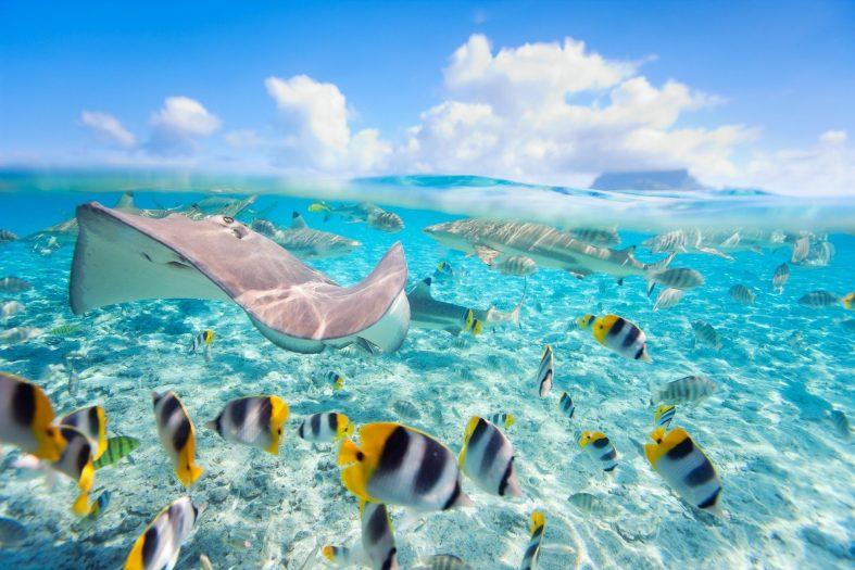 Potápění na Bora Bora