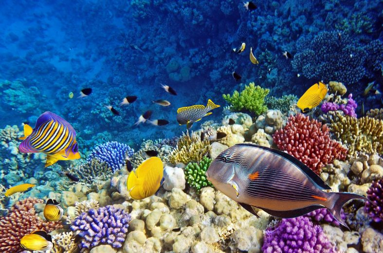 Potápění v Rudém moři, Sharm el Sheikh