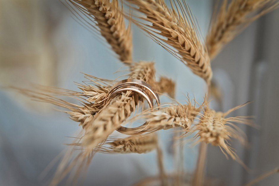Obilí: žito, pšenice a ječmen na svatbě?