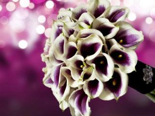 Výrazná kytice z bílých kal s fialovými prostředky